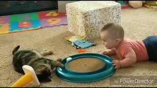Домашние животные котики собачки и другие подборка видео