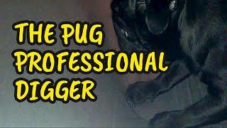 THE PUG   Professional Digger