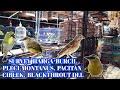 Survey Harga Burcil Pleci Montanus Pacitan Ciblek Blackthrout Dll Pb Pramuka  Mp3 - Mp4 Download