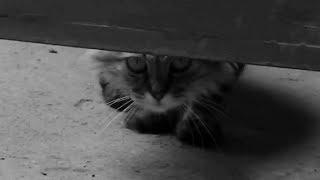 Короткометражка, ужасы FEAR AND CATS (AILUROPHOBIA)
