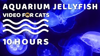 CAT GAMES - Relaxing Aquarium Jellyfish - 10 Hours. Video for Cats | Nature's  Screensaver.