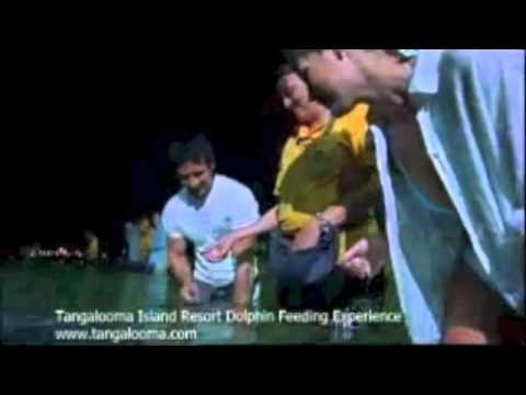 Tangalooma And Moreton Island Dolphin Feeding Adventure, Brisbane, Australia   Experience OZ & NZ