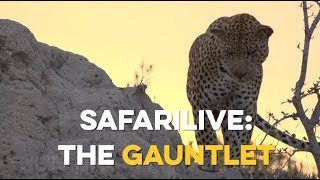10 days until safariLIVE: The Gauntlet