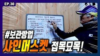 [포도] 샤인머스켓 접목 묘목 강좌 !
