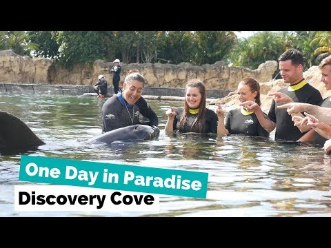 Discovery Cove vlog with Georgia