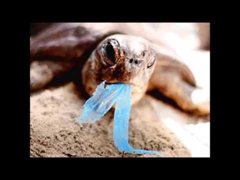 Beach Pollution presentation