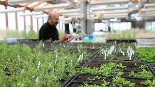 Discovery may help save crops from stress