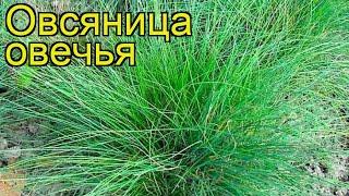 видео Декоративные злаки и травы в саду сорта высадка и выбор