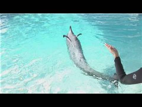 Dolphin Facts : Why Are Dolphins Considered Mammals?