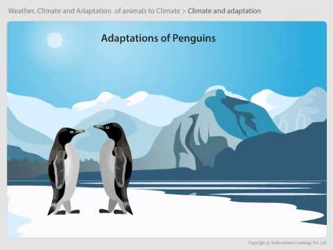 06 Adaptations of animals in polar regions