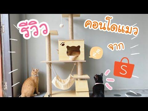 รีวิว คอนโดแมว จาก shopee   รีวิวไปเรื่อย by nittha