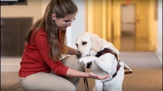 Celebrating Guide Dog Month: Meet Tanja and Nabu