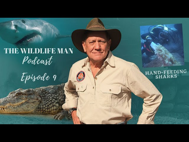 The Wildlife Man Podcast -  Episode 9 - Hand-Feeding Sharks