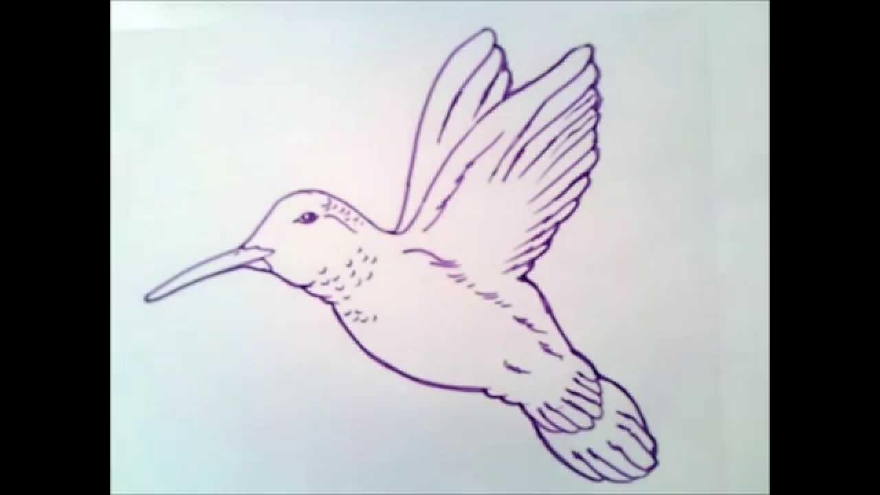 Como Dibujar Un Colibri Como Dibujar Un Colibri Paso A Paso