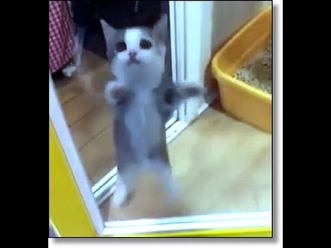 Kitten Gets So Excited He Jumps Up and Down