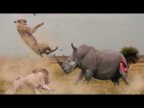 ПРИРОДА. 10 противостояний животных друг другу