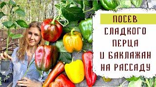 Посадка болгарского перца и баклажан на рассаду 2021. Обо всём!