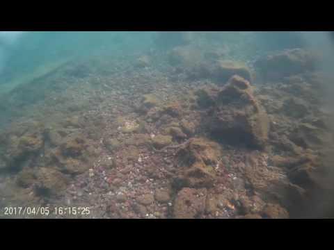 Sea snake in Malabo Equatorial Guinea