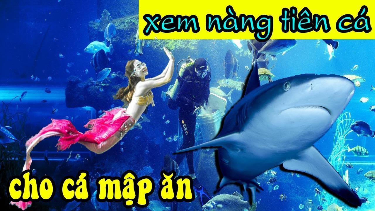Khu vui chơi Vinpearl Land Phú Quốc – Review chi tiết thủy cung Vinpearl Land Phú Quốc