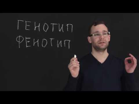 Генетика законы менделя видео уроки