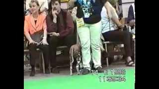 World Dog Show Helsinki 11-14.06.1998 (xolo).avi