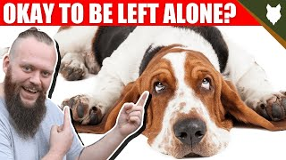 Can a BASSET HOUND be left alone?
