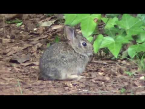 The Baby Jack Rabbit is Back