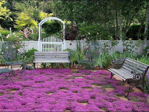 Какие почвопокровные растения лучшие для газона