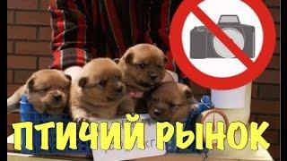 Птичий Рынок в Москве. Снимать Запрещено. Вызвали Охрану