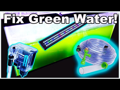 How To Fix Green Water In Your Fish Tank!