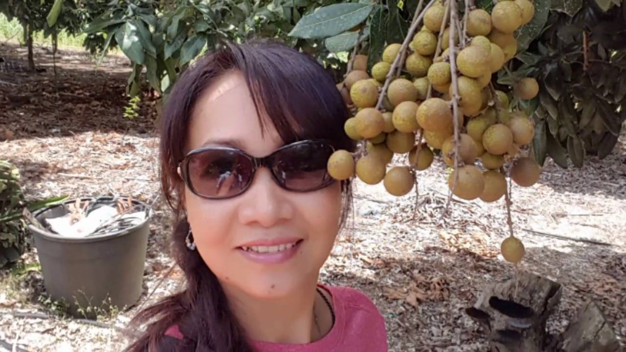 Vietnamese fruit farm in Florida 5/28/16