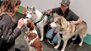 huskies-meeting-other-famous-pets-petcon