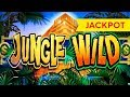 Jackpot Handpay! Jungle Wild Slot - $11.25 Max Bet - Awesome Bonus, Yes!!! video