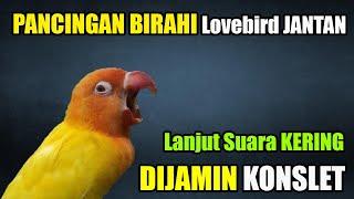 Download lagu PANCINGAN BIRAHI LOVEBIRD JANTAN KONSLET LANJUT SUARA KERING
