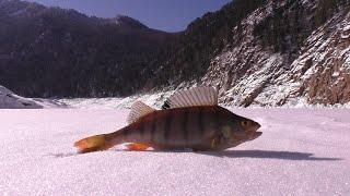 Зимняя рыбалка на Саяно Шушенском водохранилище Жерлицы Хариус Окунёвый клондайк Фильм2