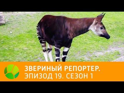 Читать онлайн Крапивин Владислав Оруженосец Кашка