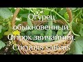 """Наталя Земна - Огірки - """"Ранок"""" на КРТ"""