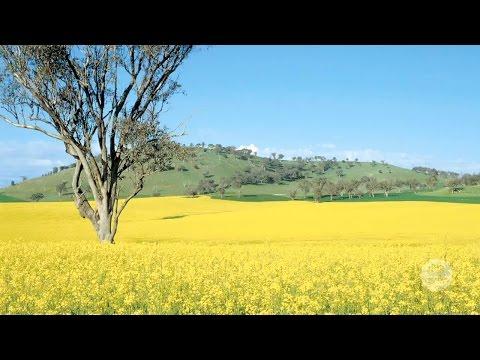 Australia's biodiversity: farming, pastoralism and forestry