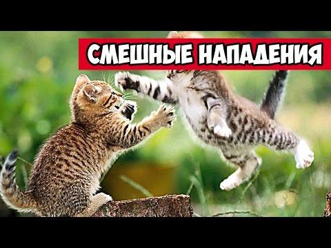 Смешные нападения животных,