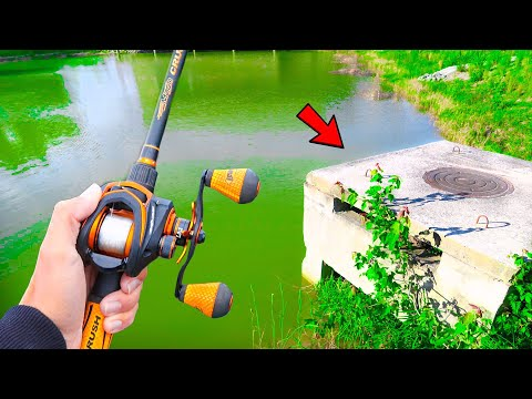 This SMALL Pond Is LOADED W/ GIANT Bass (Bank Fishing)