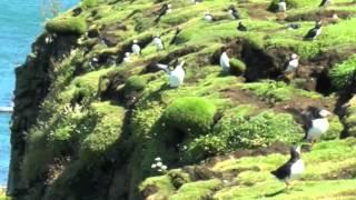 Gambar cover Treshnish and Staffa Isles Tour