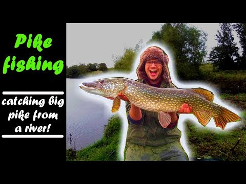 PIKE FISHING|catching MONSTER PIKE From A YORKSHIRE River!