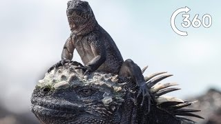 Filming Iguana vs Snakes | Behind the Scenes 360° | Planet Earth II