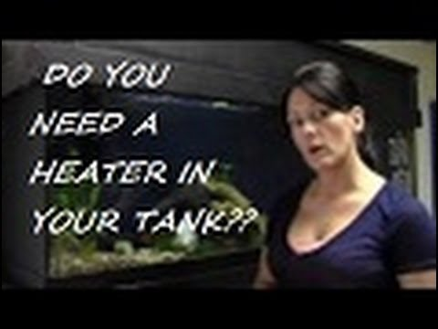 "Aquarium Heaters and Temperature ""Quick tips with Lisa"""