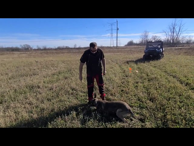 K9 Tango article indication and ball hunt