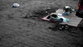 Анапа.Собака на пляже сама открыла бутылку чтоб попить!