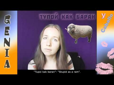 insultos-rusos-(animales)---russian-insults-(animals)-(ruso-basico)