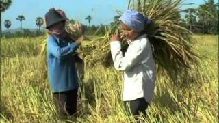 System of Rice Intensification in Cambodia