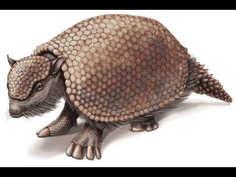 Glyptodon | Enciclopedia sobre Dinosaurios - YouTube
