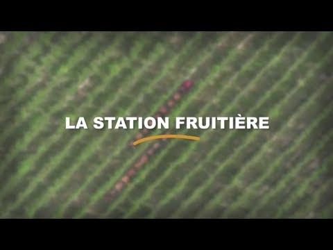 La station fruitière